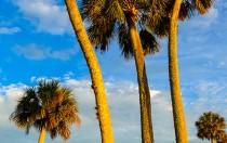 Lake Jessup Palms 4