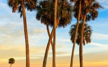 Lake Jesup Palms 3