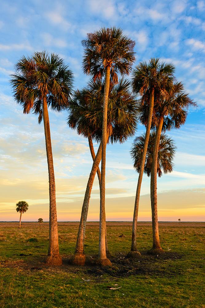 Lake Jesup Palms 3