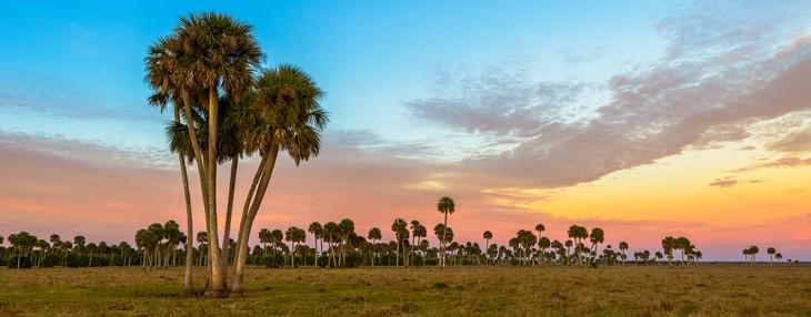 Lake Jessup Palms 2