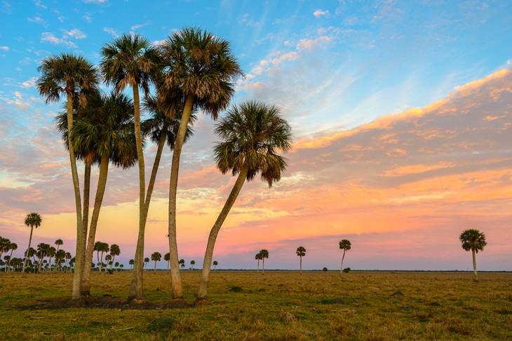 Lake Jessup Palms