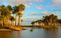 Island of Palms