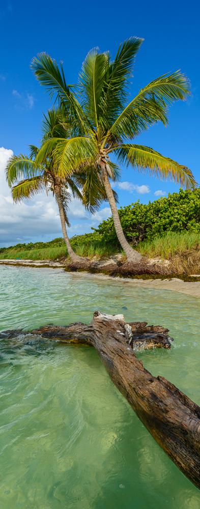 Bahia Honda Palms 2