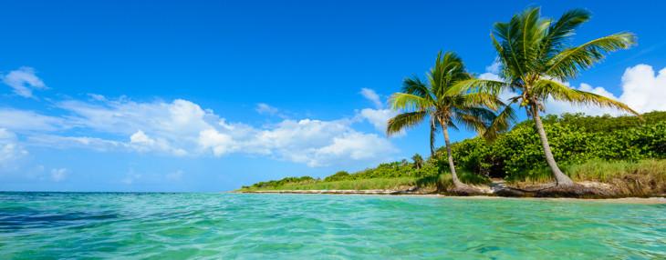 Bahia Honda Palms 3