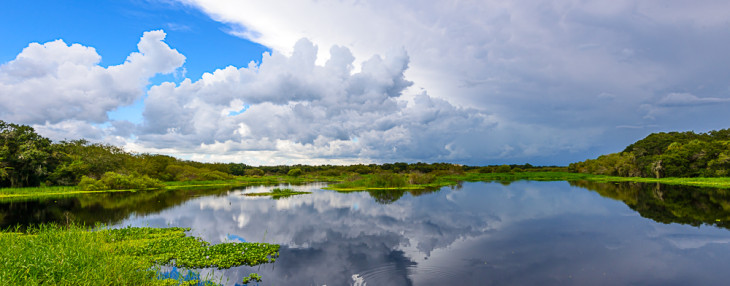Myakka River Reflections
