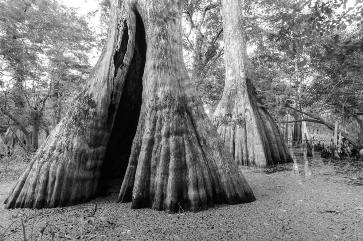 Deep Creek Cypress 1