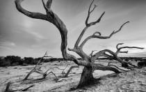 cumberland-island-DSC_3782-web