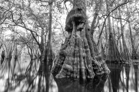 Ancients of the Suwannee River Valley 1