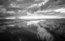 Storm Over the Marsh