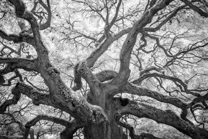 Angel Oak 2