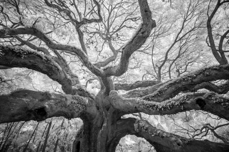 Angel Oak 4