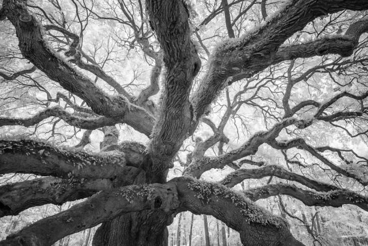 Angel Oak 1