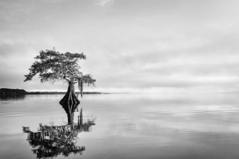 Blue cypress serenity black and white lake cypress tree photo