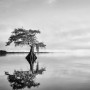 Blue Cypress Serenity - Black and white lake Cypress tree photo